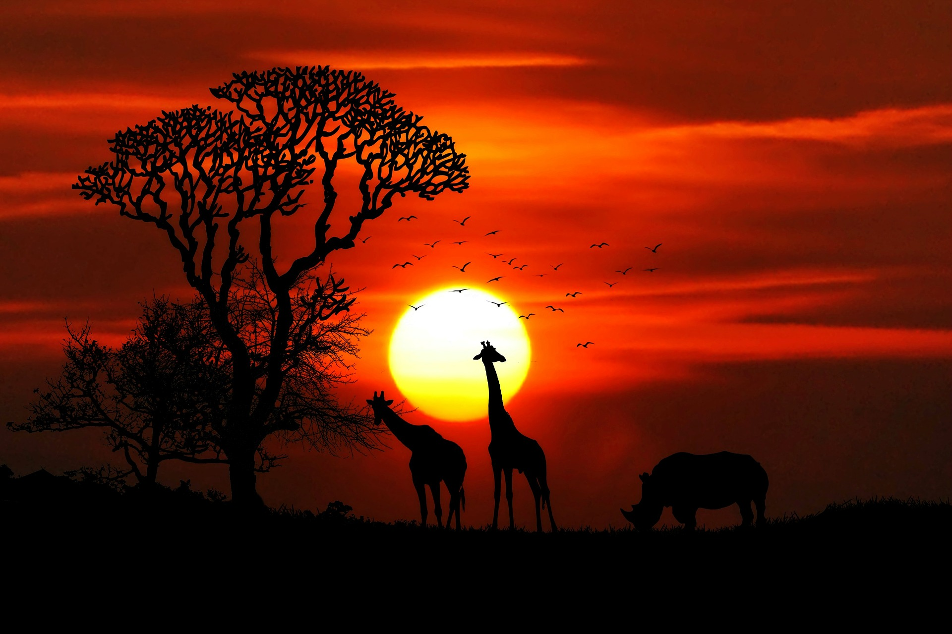 Category: Africa